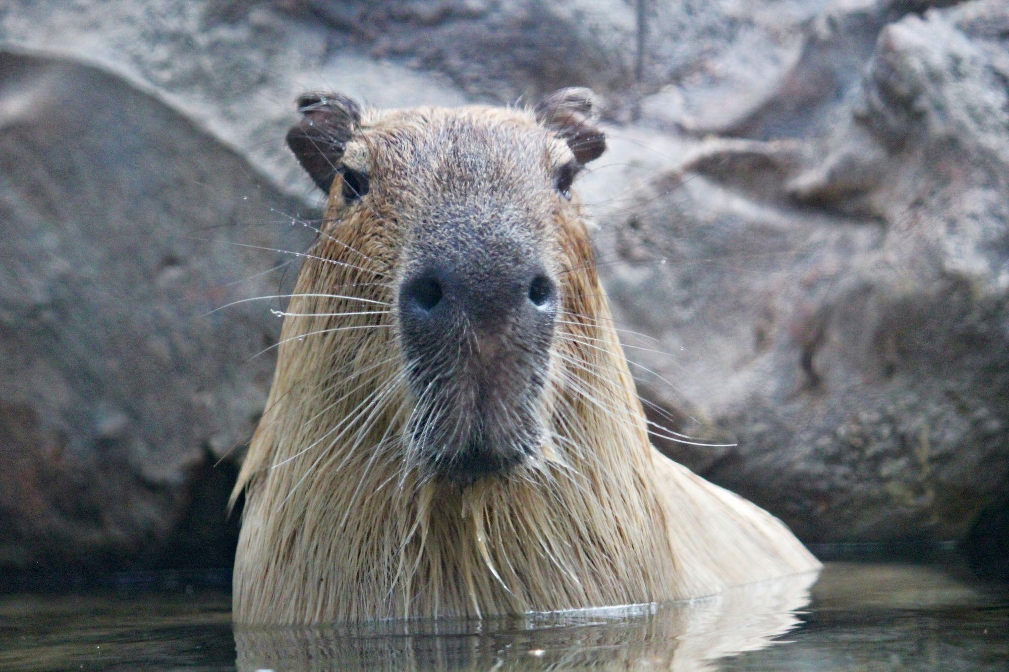 Installing capybara-webkit gem on Ubuntu 16.04
